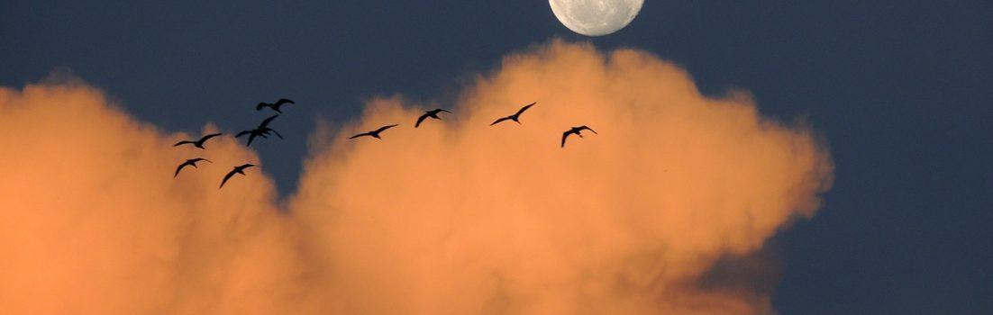 Ich wünsch mich auf den Mond